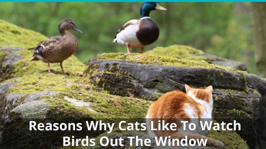 reasons why cats like watching birds