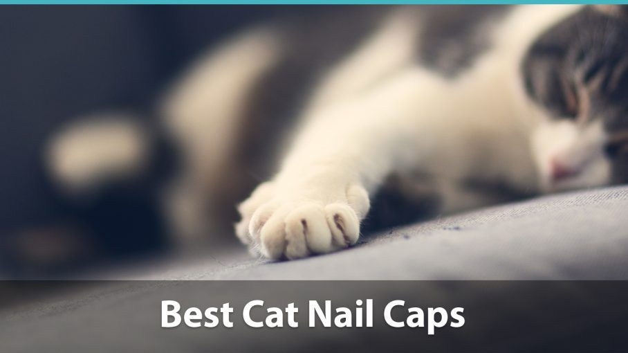 Best Cat Nail Caps Reviewed | Rating Soft Paws Claw Covers for Kitties