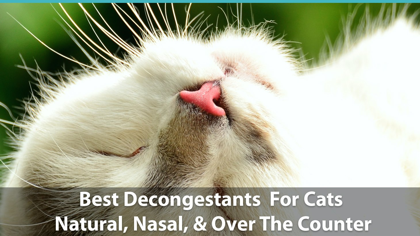 cats decongestants counter nasal natural catological