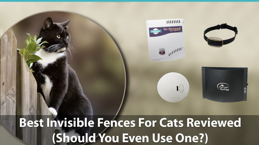 Best Invisible Fences For Cats Reviewed Do