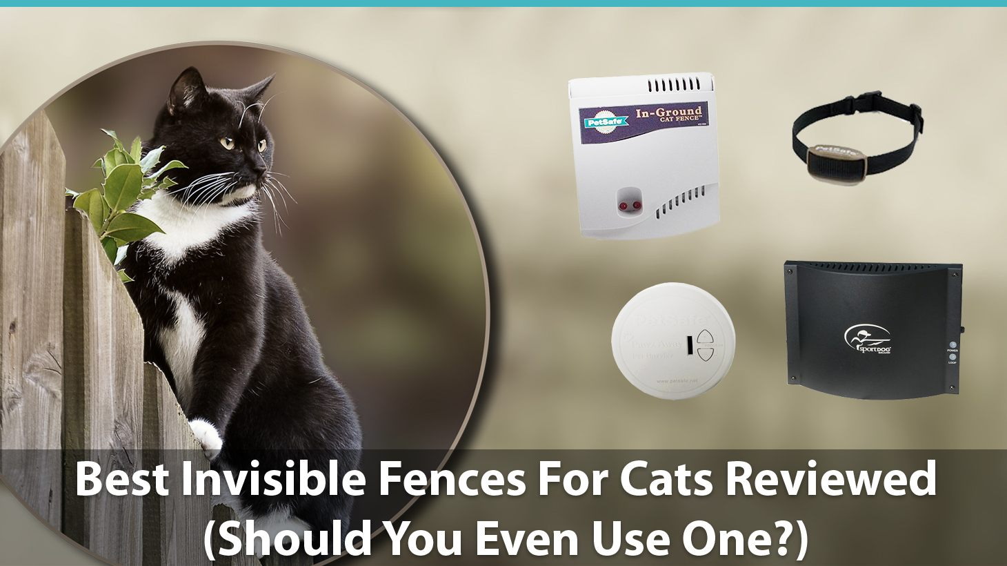 Best Invisible Fences For Cats Reviewed Do They Work Should You Even Use One