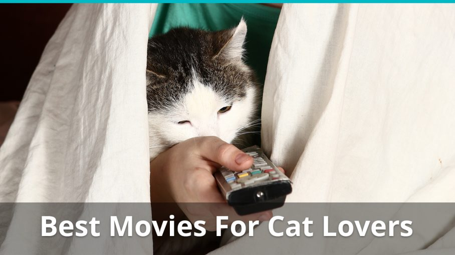 best movies cat lovers