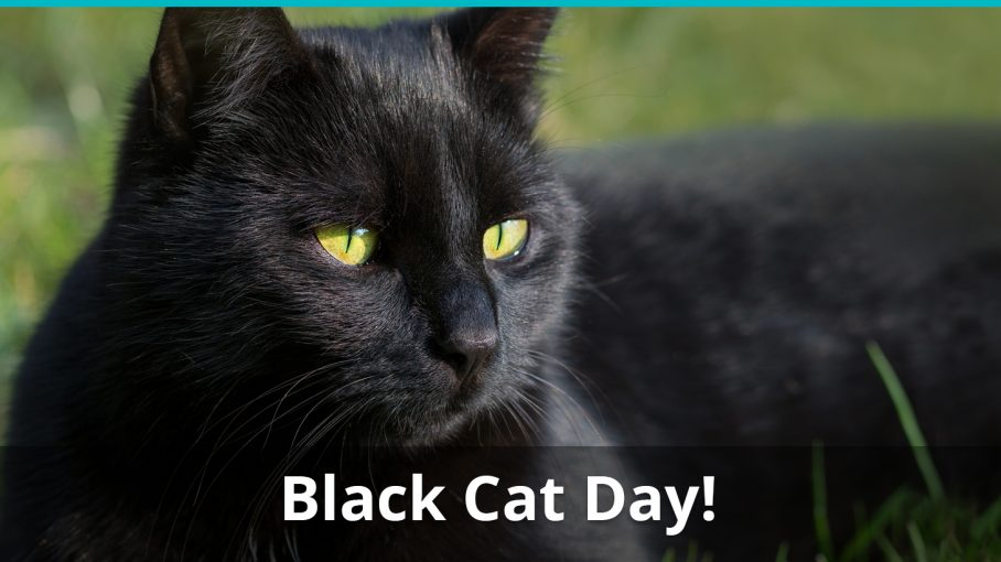 black cat day