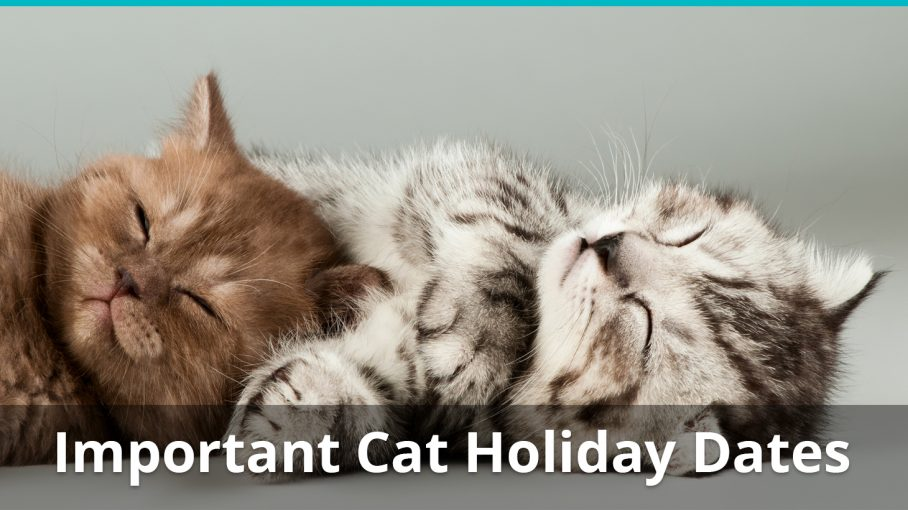 important cat holiday dates information