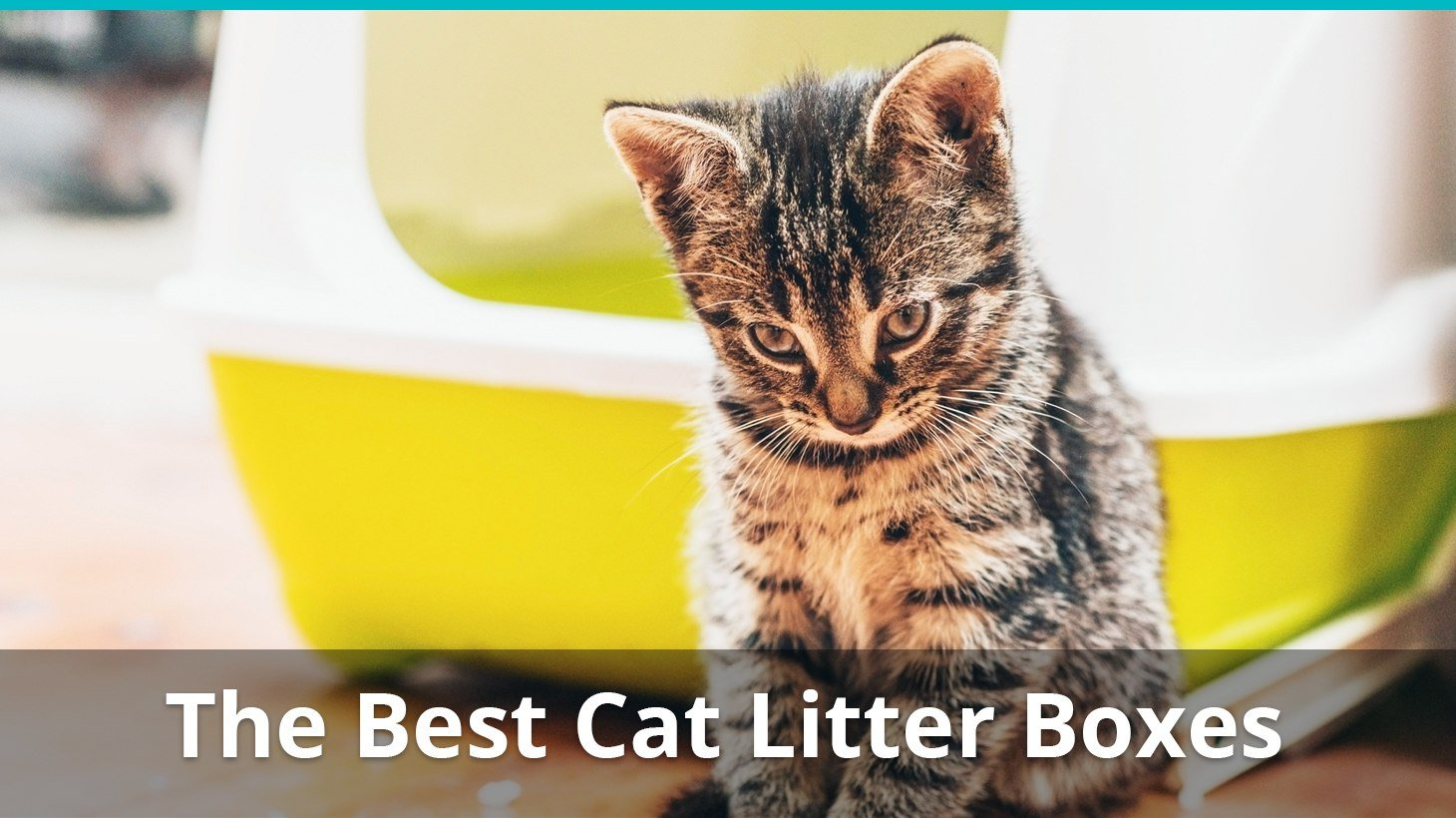 Why Do Cats Like Kitty Litter