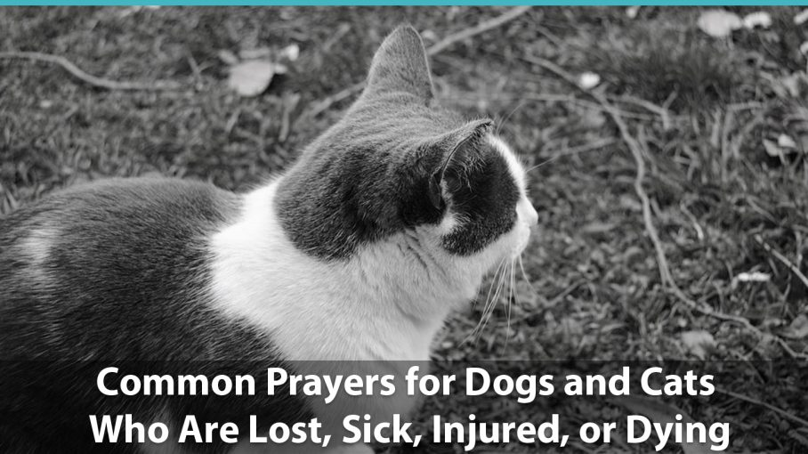 Common Prayers For Dogs And Cats Who Are Lost Sick Injured Or Dying