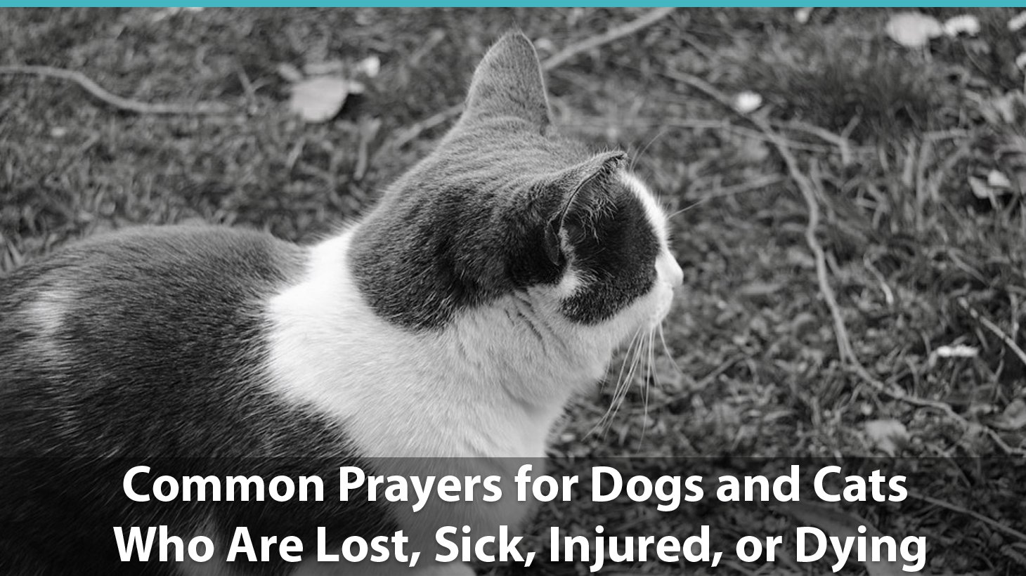 Common Prayers for Dogs and Cats Who Are Lost, Sick, Injured, or Dying