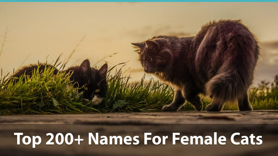 Top 200+ Names For Girl Cats (Cute, Funny, Unique, & Pun Names!)