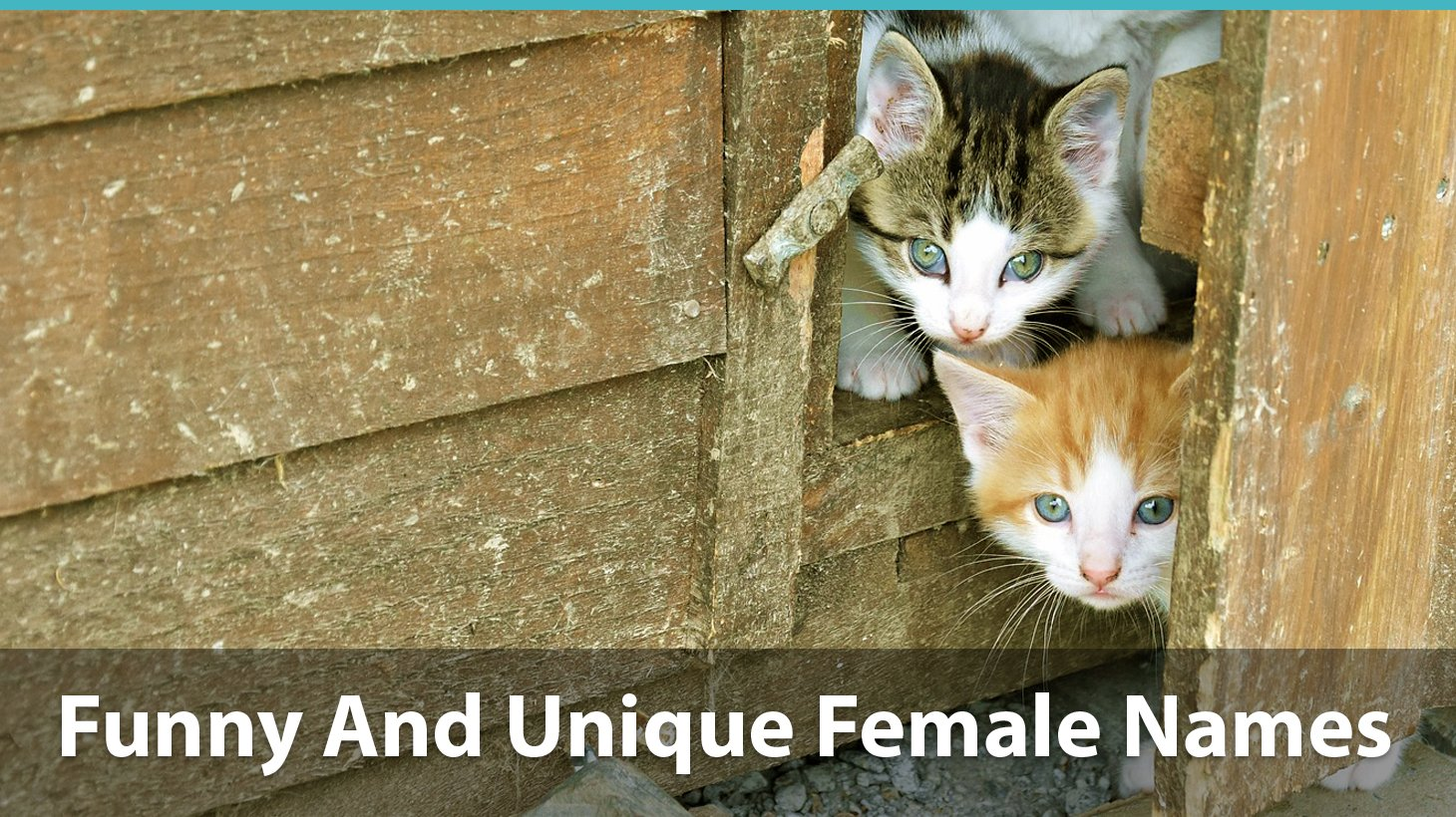 Top 200 Names For Girl Cats Cute Funny Unique Amp Pun