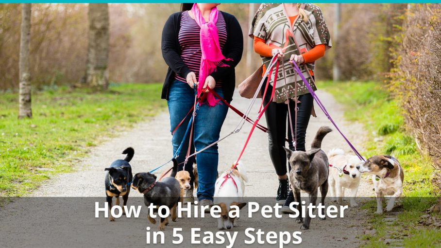 how to hire a pet sitter