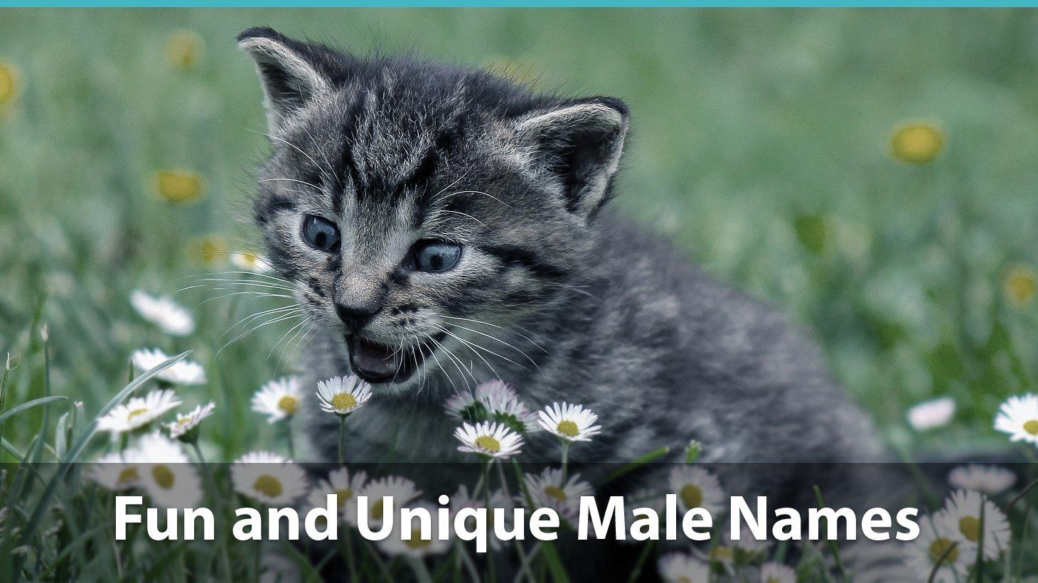 Top 200 Names For Boy Cats Cute Funny Unique Pun Names