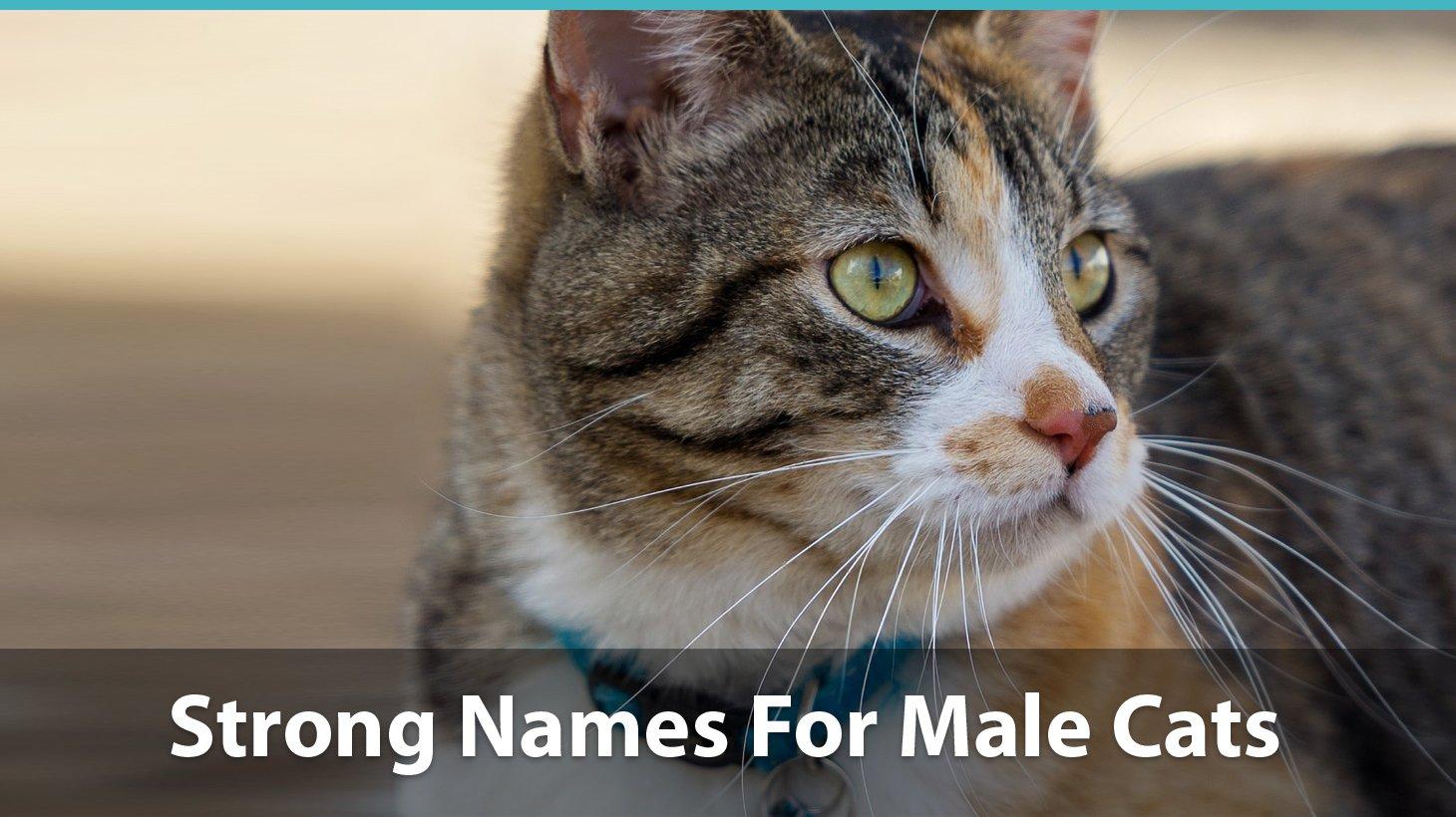 Top 200+ Names For Boy Cats (Cute, Funny, Unique, & Pun Names!)