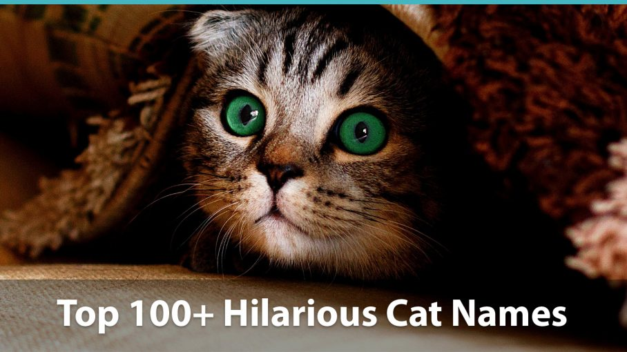 Top 100 Funny Cat Names Historical Puns Pop Culture Inspired