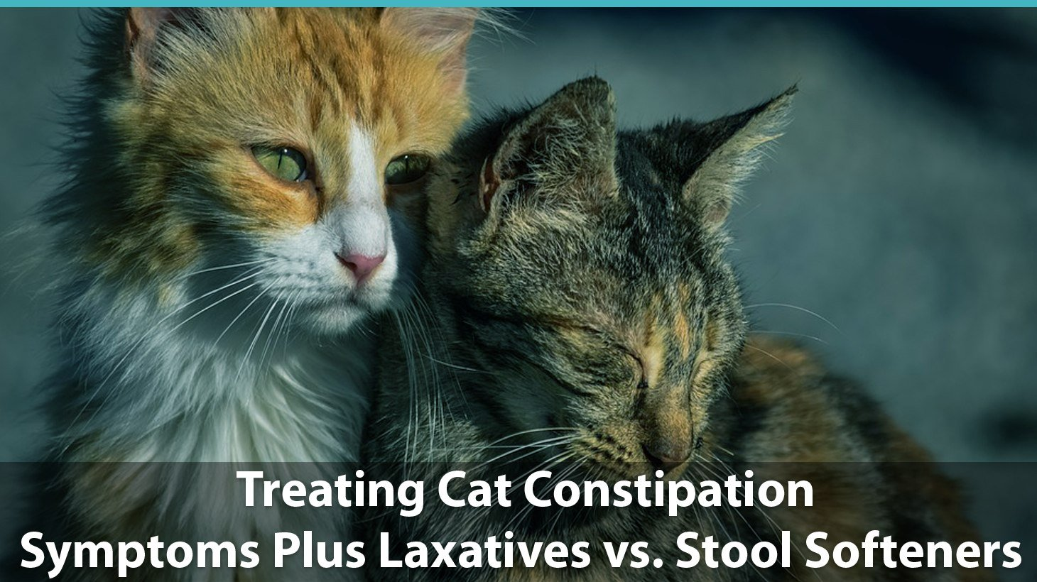 Treating Cat Constipation Symptoms And Laxatives Vs