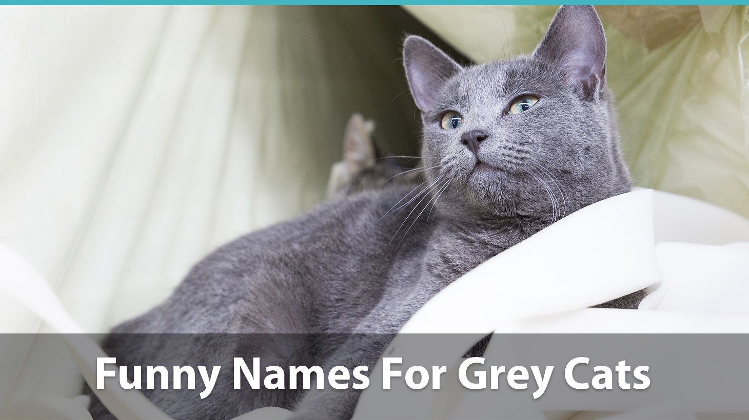 Top 120+ Names For Grey Cats (Cute, Funny, Unique, Puns, And