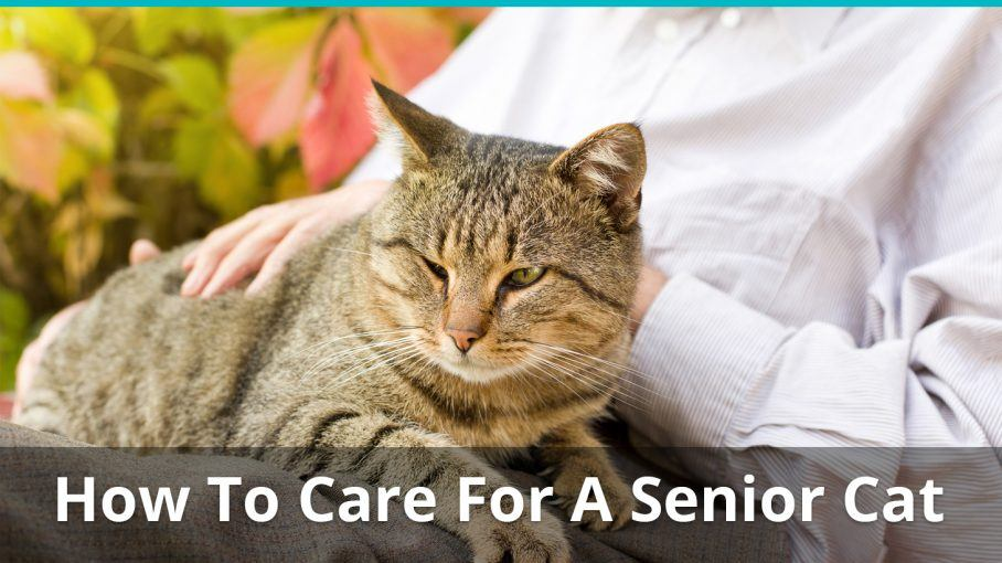 how to care for a senior cat