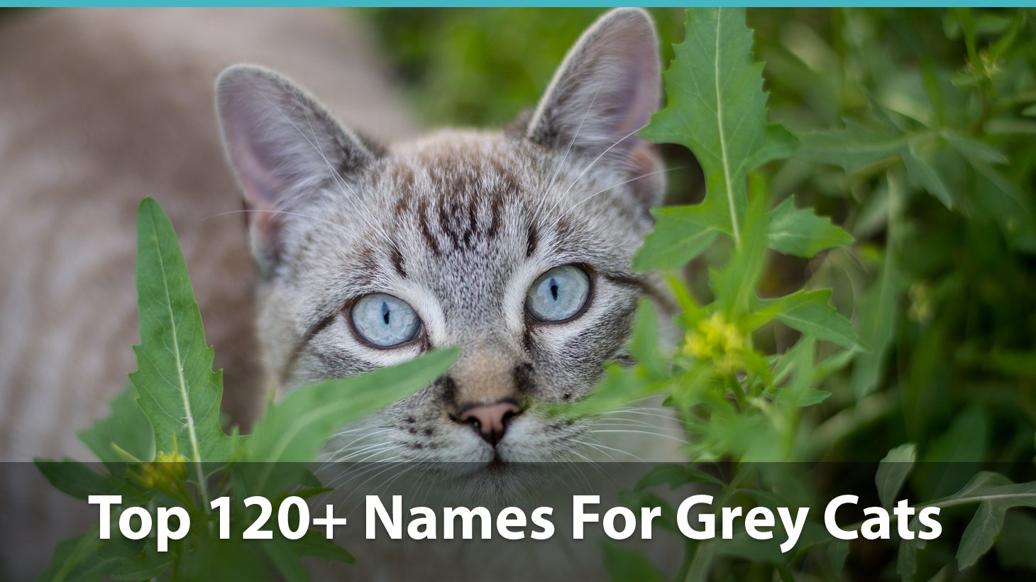 Top 120 Names For Grey Cats Cute Funny Unique Puns And More
