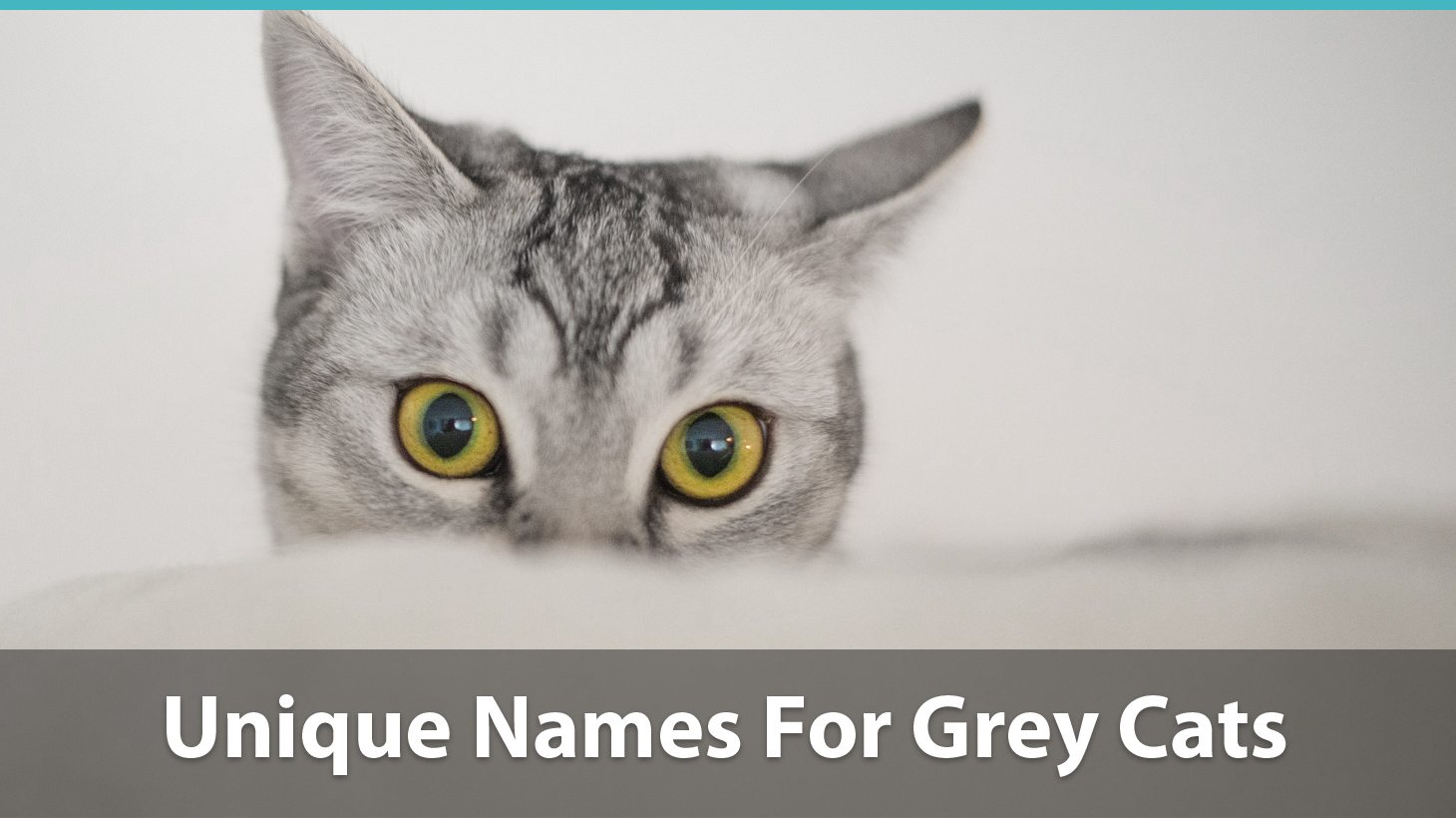 Top 120+ Names For Grey Cats (Cute, Funny, Unique, Puns, And More!)