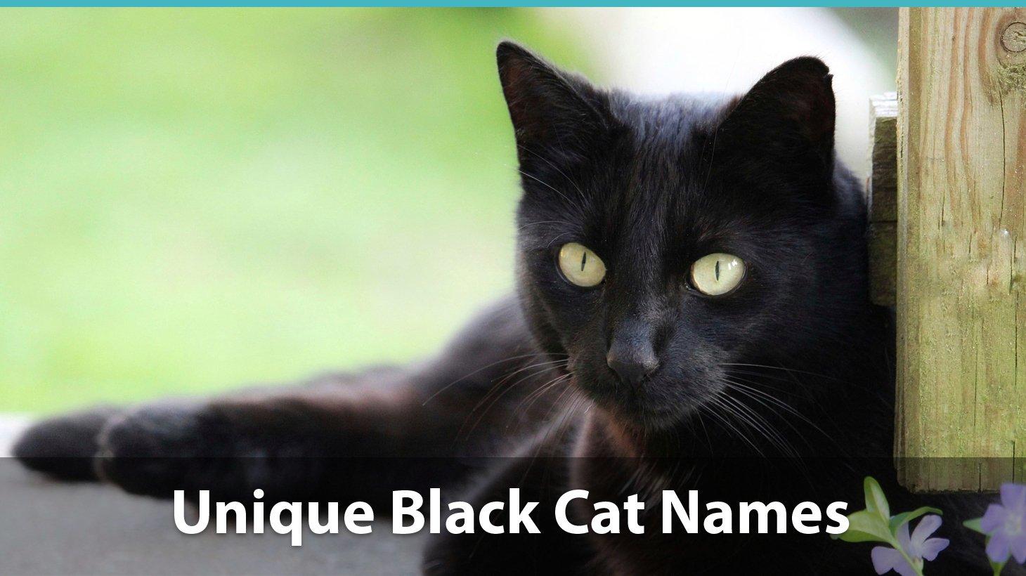 Top 150+ Names For Black Cats: Funny, Unique, Pop-Culture