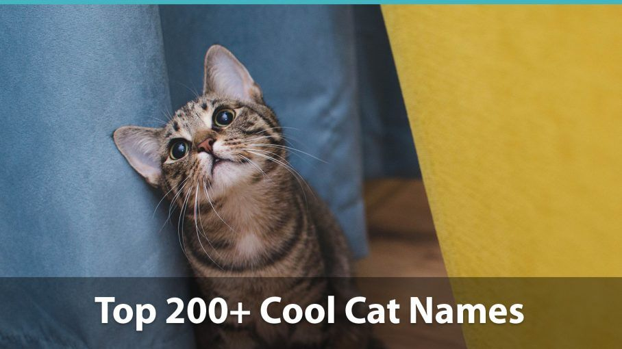 Top 200 Cool Cat Names For Boy And Girl Kitties