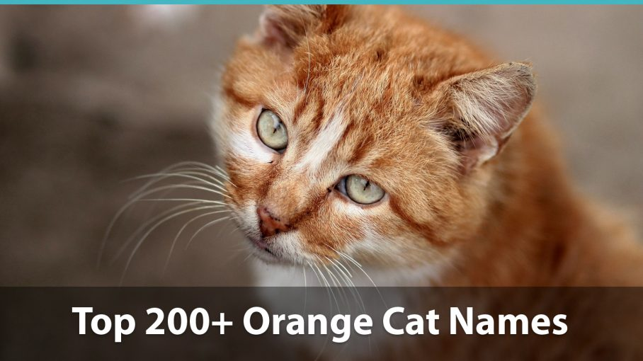 Top 200+ Names For Orange Cats: Funny, Traditional, Unique