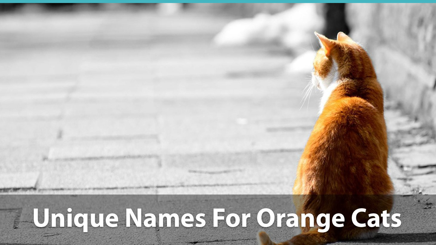 Top 200+ Names For Orange Cats: Funny, Traditional, Unique, And More!