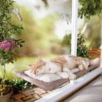 oster sunny seat window perch bed