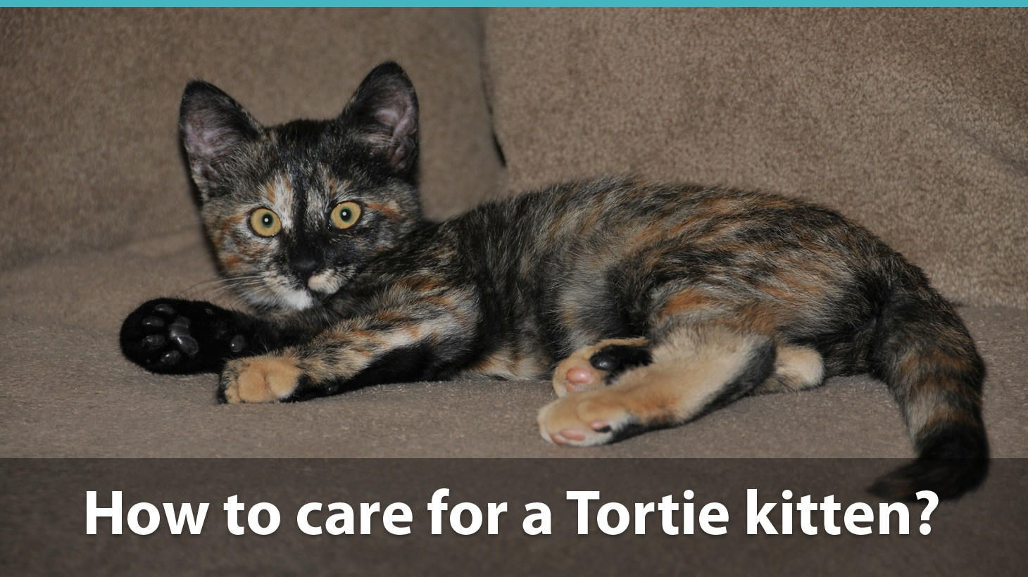 Facts About Tortoiseshell Cats | What You Need To Know About