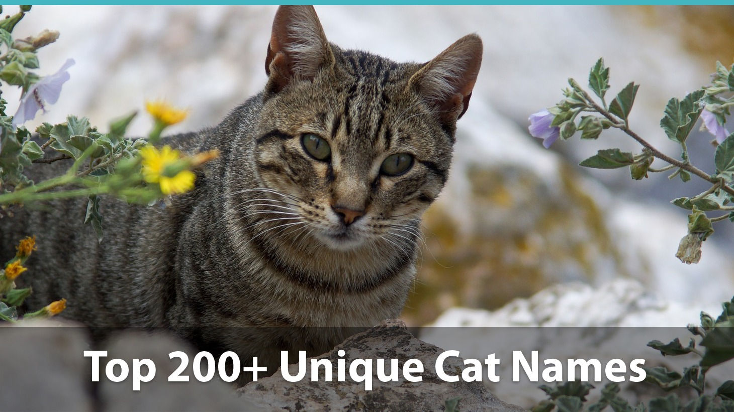 Top 200+ Unique Cat Names: Puns, Funny Options, And More!
