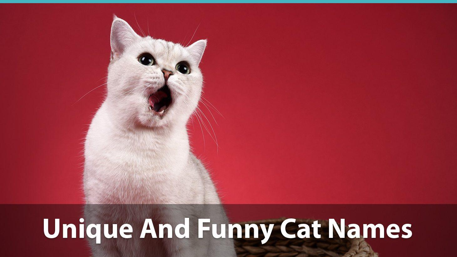 Top 200+ Unique Cat Names: Puns, Funny Options, And More!