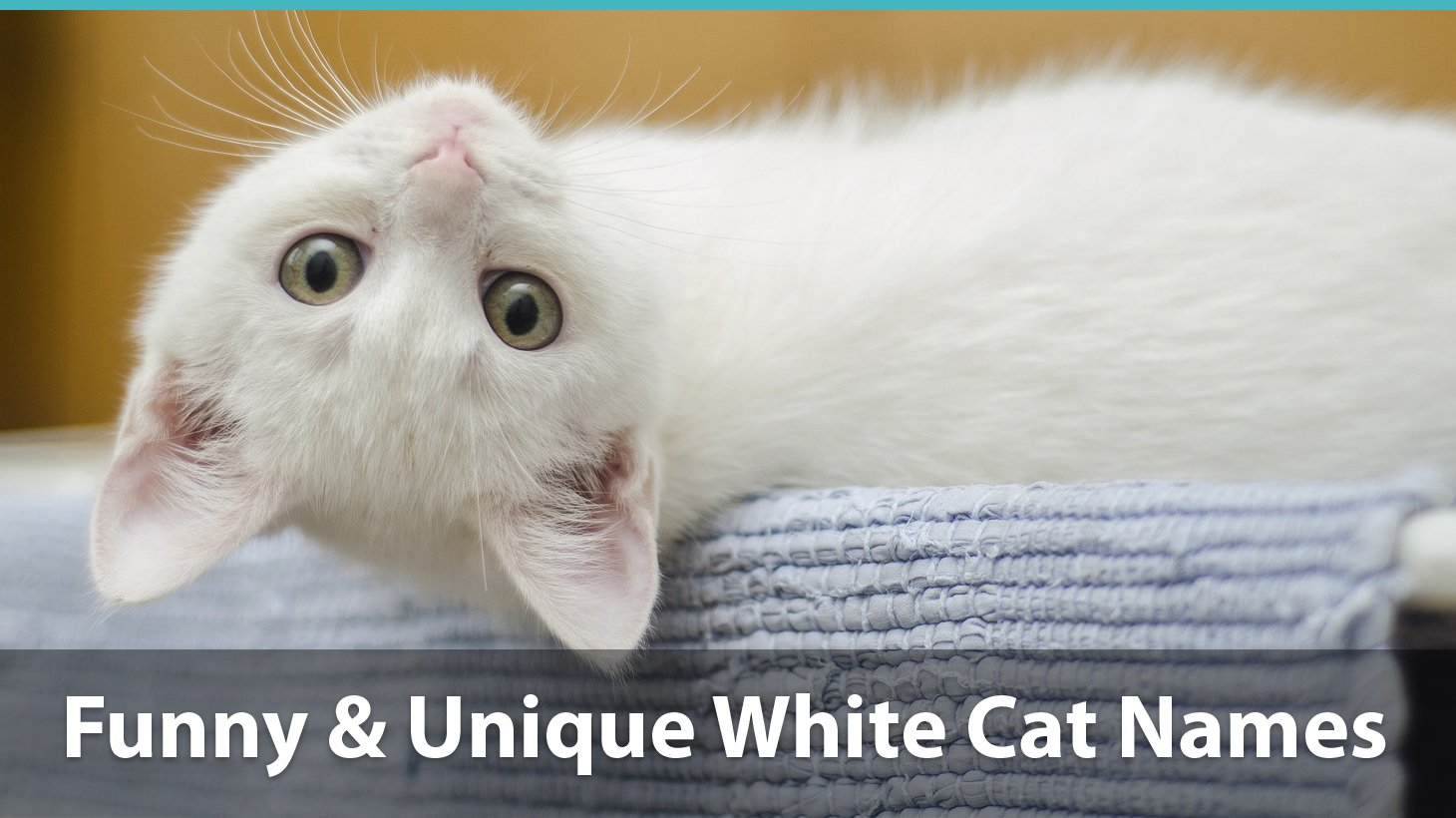 Top 150+ Names For White Cats: Funny, Traditional, Unique, And More!