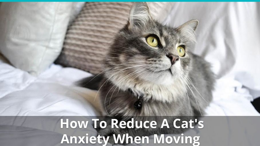reduce cats anxiety moving