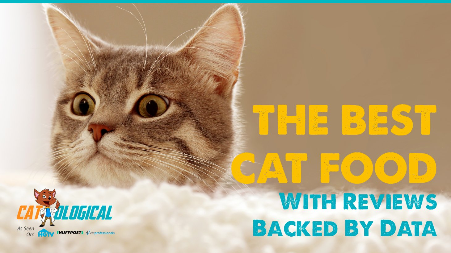 High Protein Food For Senior Cats