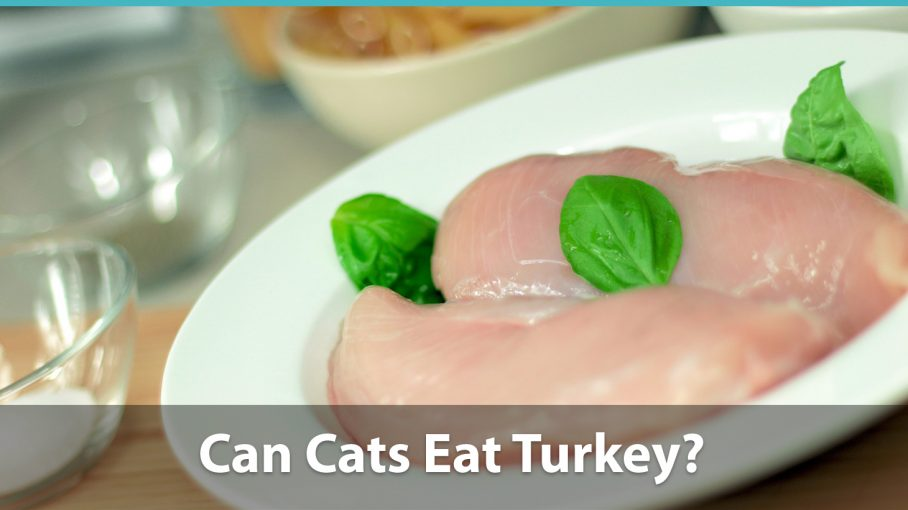 Can Cats Eat Turkey? + Cat Foods With Turkey Meat