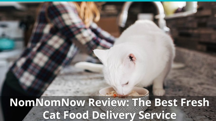 nomnomnow cat food review