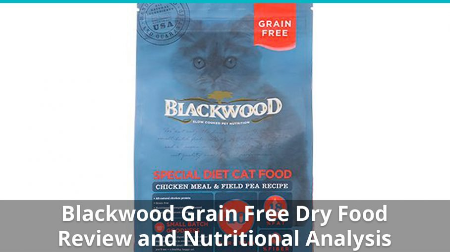blackwood grain free dry