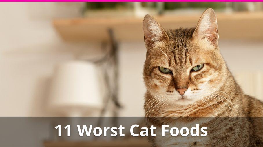 11 worst cat foods