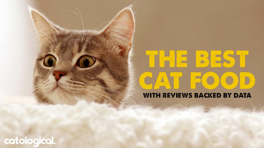 Best Cat Food With Reviews Top Wet Dry Freeze Dried Food Ratings
