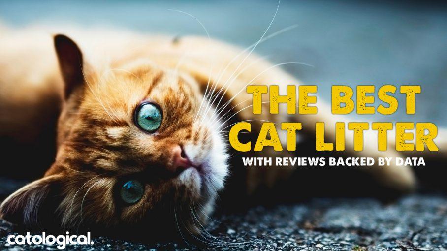best cat litter header