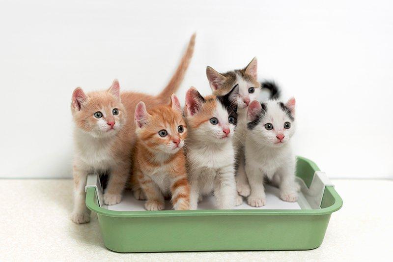 kittens inside the litter box