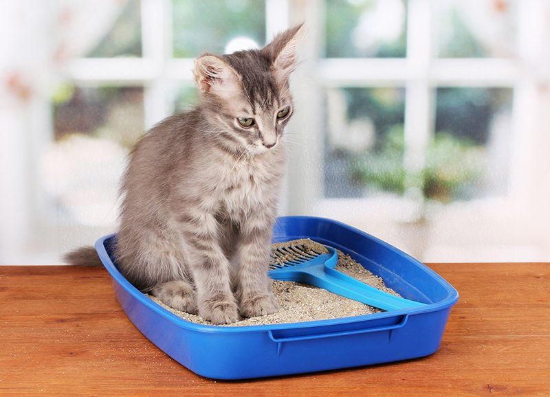 small cat sitting in litter box
