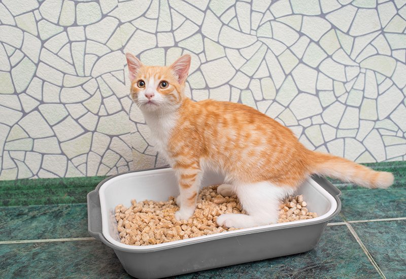 small cat standing in litter box