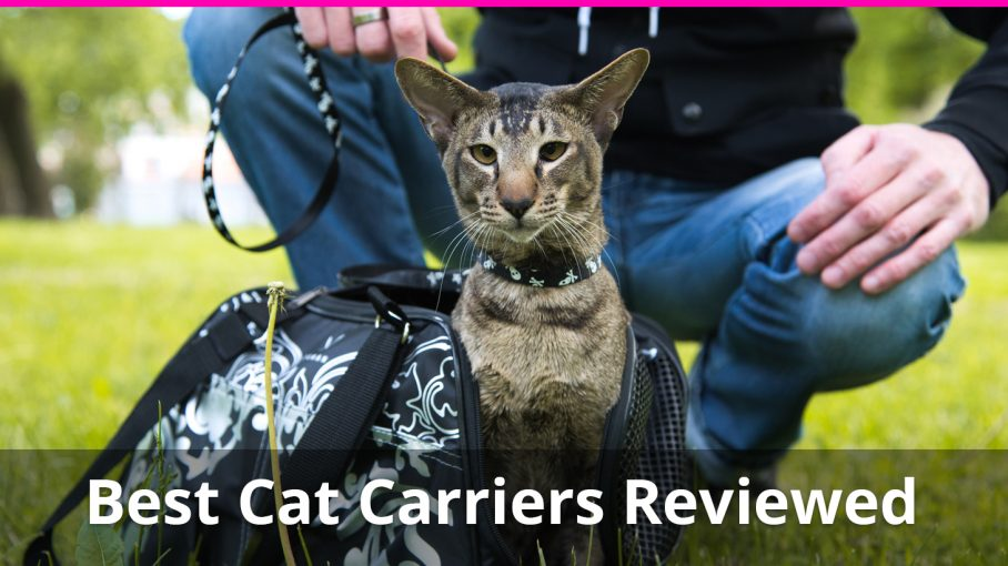 best cat carriers reviewed