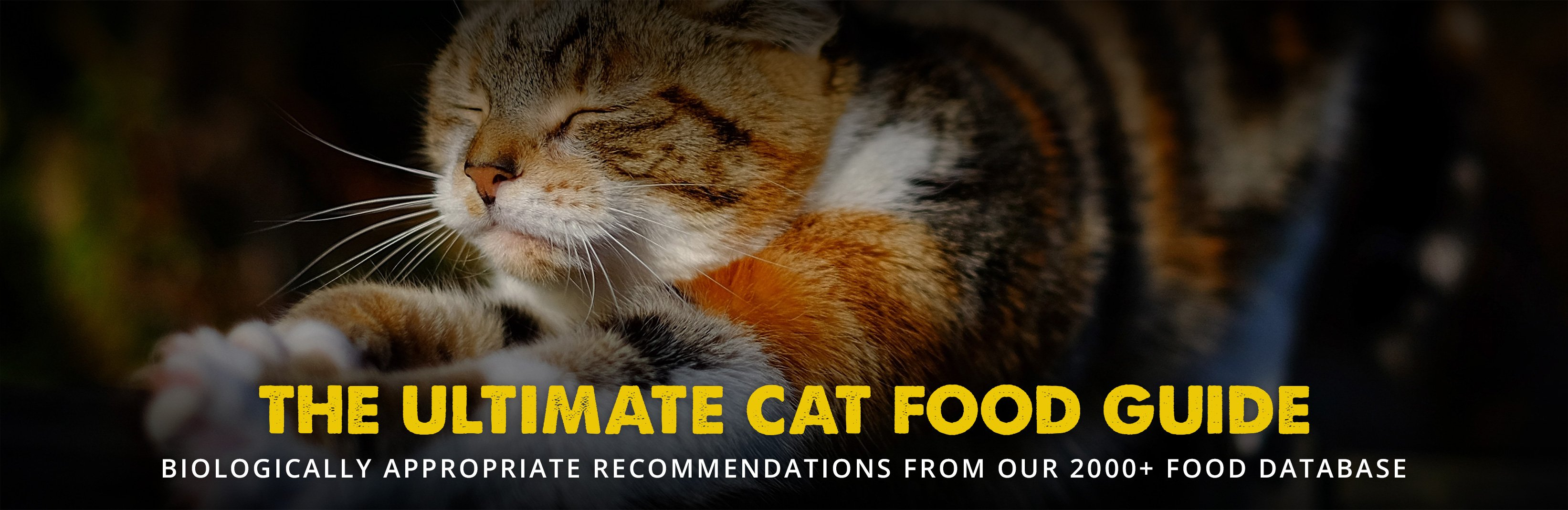 The 8 Best Cat Food Reviews From Our Insanely Huge Food Database