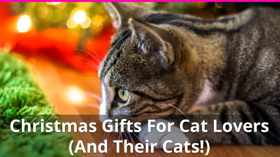 19 Amazing Christmas Gifts For Cat Lovers (And Their Cats!) : christmas gifts for cat lovers - medton.org