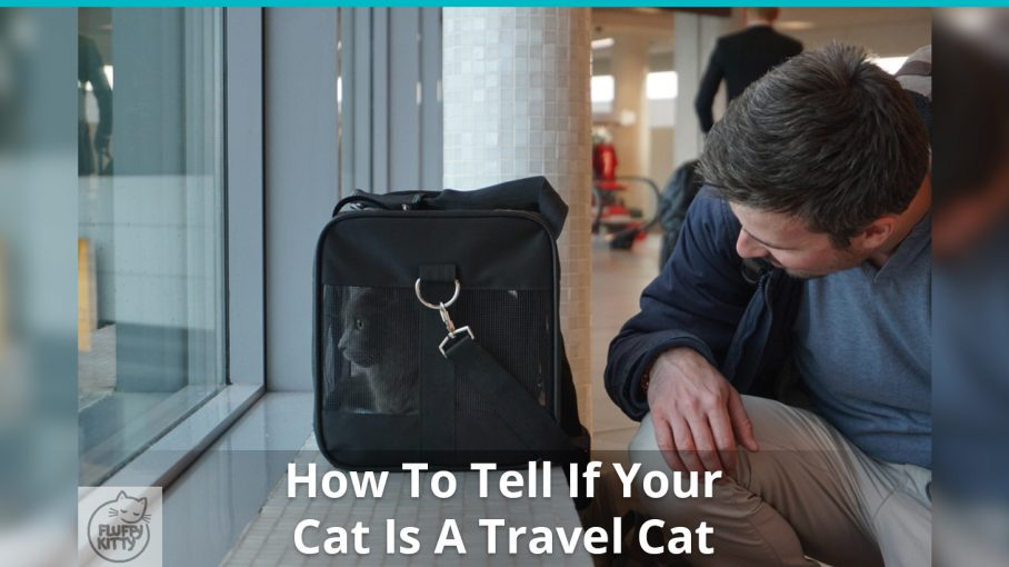 how to tell travel cat