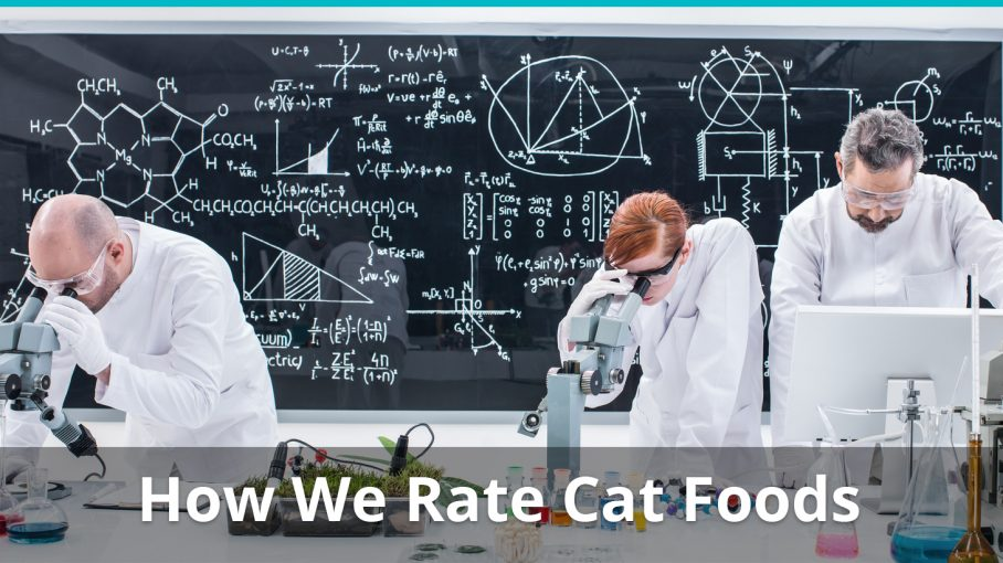 how we rate cat foods