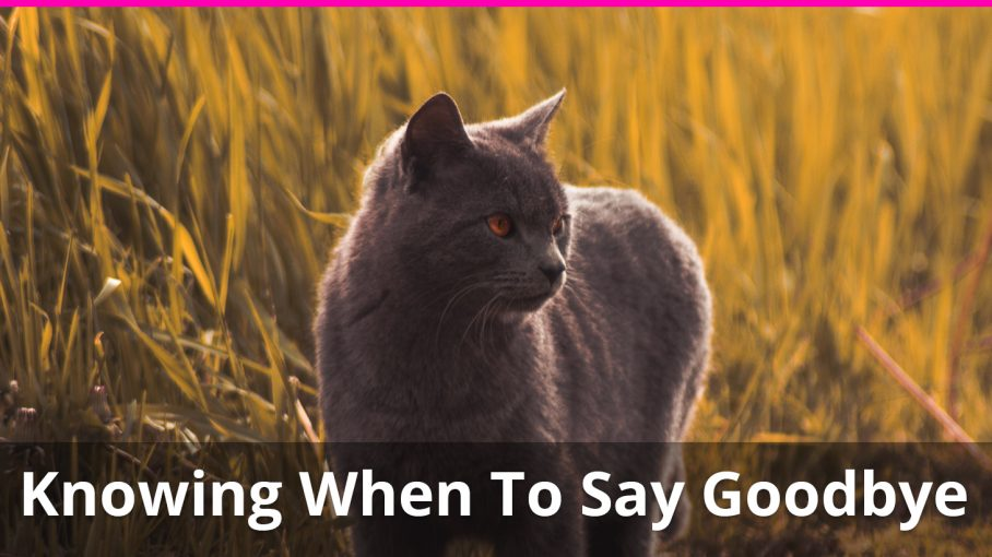 saying goodbye to your cat