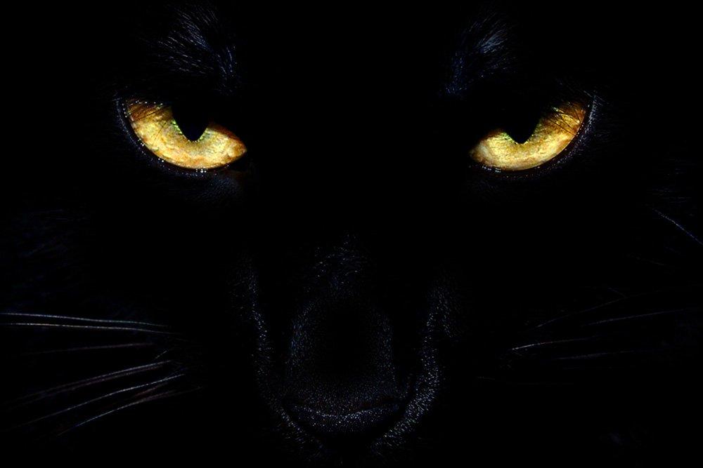badass angry black cat eyes