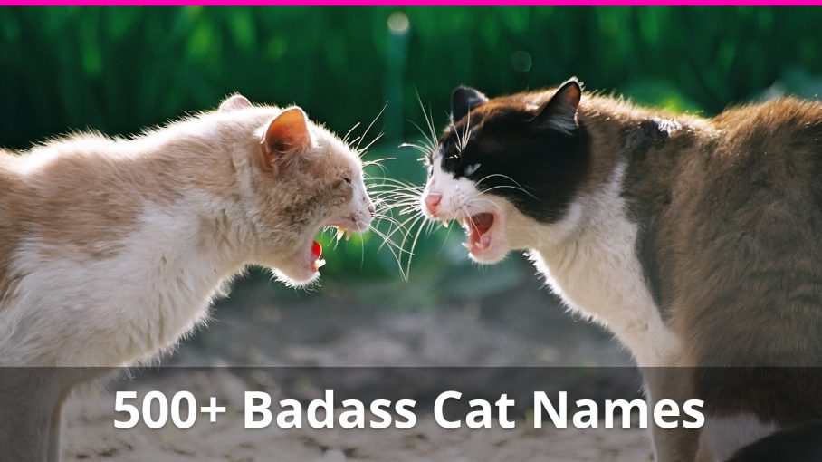 badass cat names